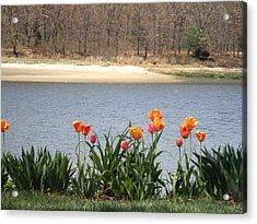 Tulips By The Bay Acrylic Print by Kate Gallagher