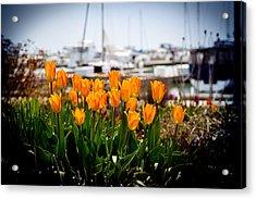 Tulips By The Harbor Acrylic Print