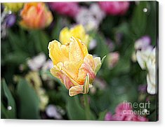 Acrylic Print featuring the photograph Tulips by Diana Mary Sharpton