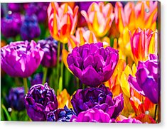 Acrylic Print featuring the photograph Tulips Enchanting 42 by Alexander Senin