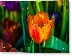 Acrylic Print featuring the photograph Tulips Enchanting 44 by Alexander Senin