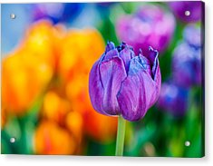 Acrylic Print featuring the photograph Tulips Enchanting 46 by Alexander Senin
