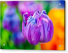 Acrylic Print featuring the photograph Tulips Enchanting 47 by Alexander Senin