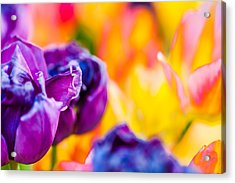 Acrylic Print featuring the photograph Tulips Enchanting 49 by Alexander Senin