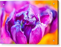 Acrylic Print featuring the photograph Tulips Enchanting 50 by Alexander Senin