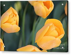 Acrylic Print featuring the photograph Tulips by Erica Hanel