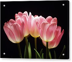 Tulips For Tania Acrylic Print