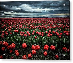 Tulips Forever Acrylic Print
