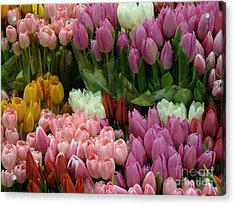 Acrylic Print featuring the photograph Tulips Galore by Terri Thompson