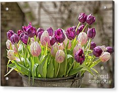 Acrylic Print featuring the photograph Tulips In A Bucket by Patricia Hofmeester