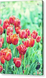 Tulips In Amsterdam Acrylic Print