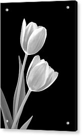 Tulips In Black And White Acrylic Print