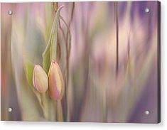Tulips In Pastel Acrylic Print