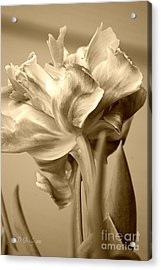 Tulips In Sepia Acrylic Print