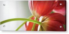 Tulips In The Morning Acrylic Print by Theresa Tahara