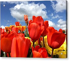 Tulips In The Sky Acrylic Print