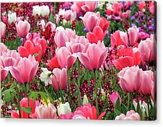Acrylic Print featuring the photograph Tulips by James Eddy