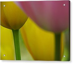 Tulips Acrylic Print by Juergen Roth