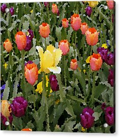 Tulips Acrylic Print by Rodger Mansfield