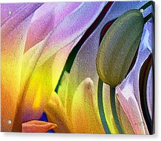 Tulips Secret Acrylic Print