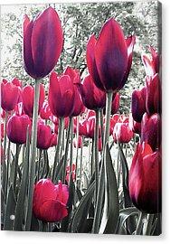 Tulips Tinted Acrylic Print