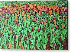 Tulips Tulips Everywhere Acrylic Print