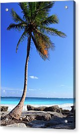 Tulum Mexico Single Tree On Beach Acrylic Print by Maria Swärd