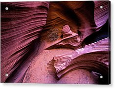 Acrylic Print featuring the photograph Tumbleweed In The Canyon by Stephen Holst