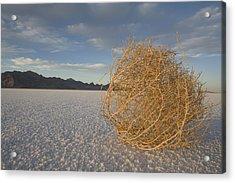 Tumbleweed On The Bonneville Salt Acrylic Print by John Burcham
