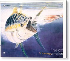 Tuna To The Lure Acrylic Print by Bill Hubbard
