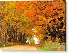 Tunnel Of Orange Maples Acrylic Print by Terri Gostola