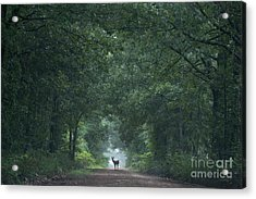 Tunnel Of Trees Acrylic Print