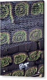 Turfs Up Acrylic Print by Jez C Self