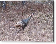 Acrylic Print featuring the photograph Turkey 1155 by Michael Peychich