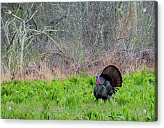 Acrylic Print featuring the photograph Turkey And Cabbage by Bill Wakeley