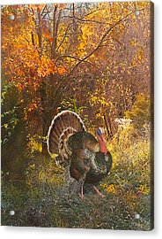 Turkey In The Woods Acrylic Print
