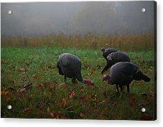 Turkey On A Foggy Morning Acrylic Print by James Jones