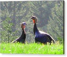 Turkeys In Love Acrylic Print