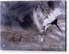Turn Around There Is Hope Acrylic Print by Cathy  Beharriell