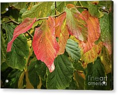Acrylic Print featuring the photograph Turning by Peggy Hughes