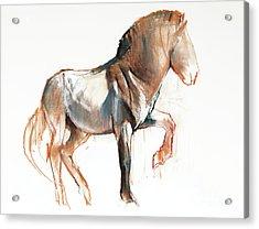 Turning Przewalski Acrylic Print
