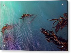 Turquoise Current And Seaweed Acrylic Print by Nareeta Martin