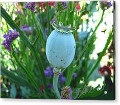 Turquoise Gem Acrylic Print by Shirley Sirois