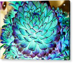 Acrylic Print featuring the photograph Turquoise Succulent 2 by Marianne Dow