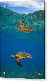 Turtle And Sky Acrylic Print