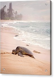 Acrylic Print featuring the photograph Turtle Beach by Heather Applegate