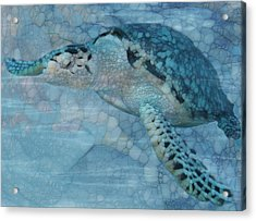 Turtle - Beneath The Waves Series Acrylic Print by Jack Zulli