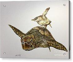 Turtle Iv Acrylic Print