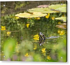 Acrylic Print featuring the photograph Turtle  by Julie Andel