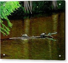 Turtle Log Spa Acrylic Print by Doug Strickland
